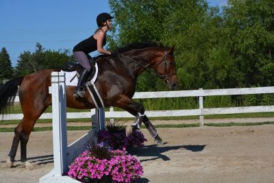 17.3 hh beautiful Dutch warm blood horse for shareboard !! - Expired
