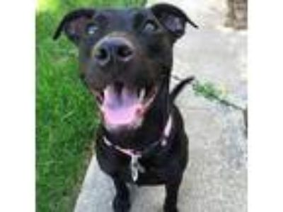 Adopt FOSTERS NEEDED! a Black - with Brown, Red, Golden, Orange or Chestnut