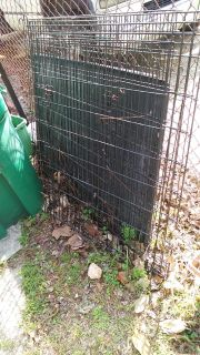 Free Huge kennel crate with tray
