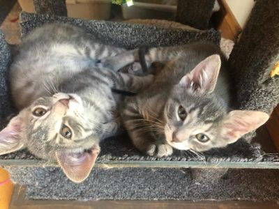 2 rescue male kittens + extras to rehome