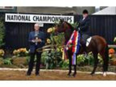 Brilliant Azteca ChampionWorking Equitation Western Dressage in Houston