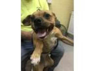 Adopt lady a Mixed Breed