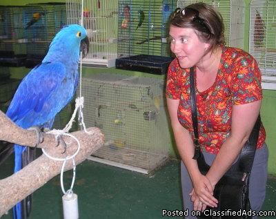 Hand raised macaws,cockatoos,greys,amazons and fertile eggs available