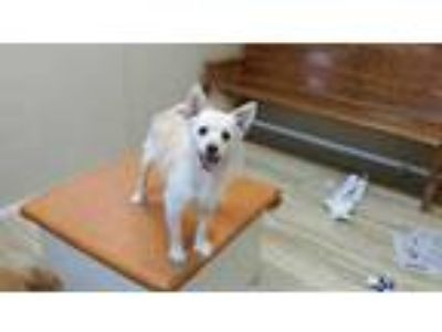 Adopt WHISKEY a Tan/Yellow/Fawn Terrier (Unknown Type, Small) / Mixed dog in