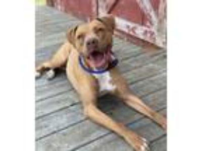 Adopt Louie a Terrier