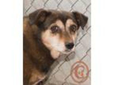 Adopt Tinkerbell goes w/Nugget - courtesy listing a Corgi, Beagle