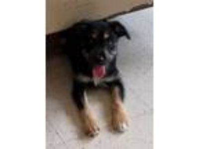 Adopt Moses a Terrier