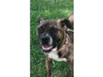 Craigslist - Animals and Pets for Adoption Classifieds in Cadiz