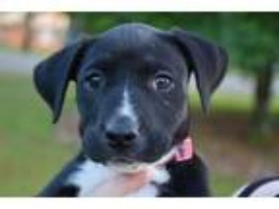 Adopt olive a Mixed Breed
