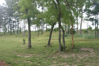 Tiny house / RV for rent in Beautiful Bastrop TX area
