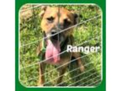 Adopt RANGER a German Shepherd Dog