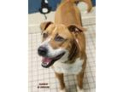 Adopt Marco a Hound, Mixed Breed