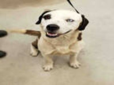 Adopt a Black - with White Mixed Breed (Medium) / Mixed dog in Rockford