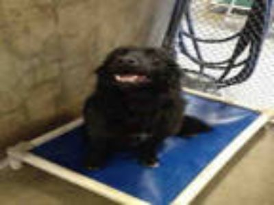 Adopt JELLY a Black Border Collie / Mixed dog in Mojave, CA (25346652)