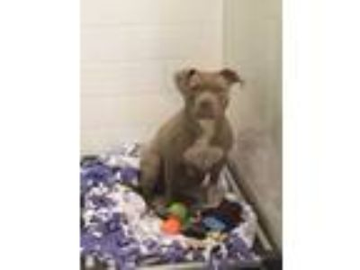 Adopt Sunshine a Tan/Yellow/Fawn Mixed Breed (Large) / Mixed dog in Dubuque