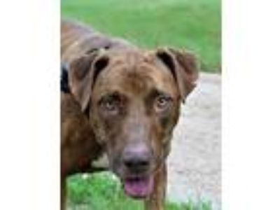 Plott Hound - Kyle Classifieds - Claz org