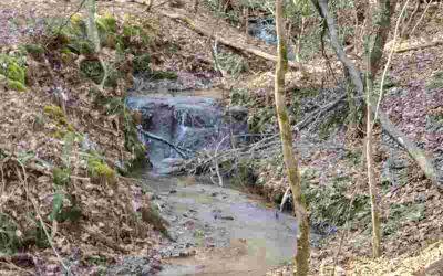 Lt 10 Bear Paw Trail Blue Ridge, 7.68 acres of wooded
