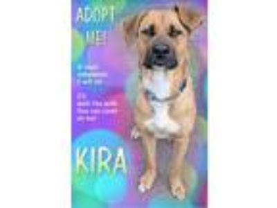 Adopt Kira a Shepherd (Unknown Type) / Mixed dog in Charlottesville