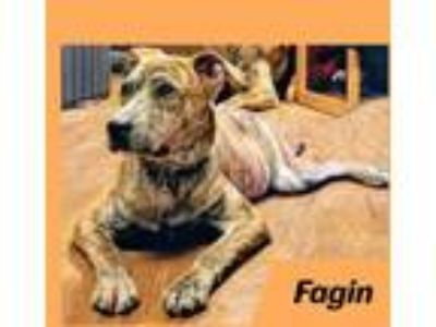 Adopt Fagin a Mountain Cur