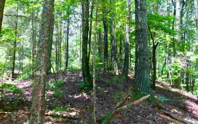 1.32 Fawn Lane Ellijay, Looking for a easy to build on lot