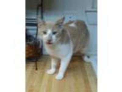 Adopt Geoffrey a Orange or Red (Mostly) Domestic Shorthair (short coat) cat in