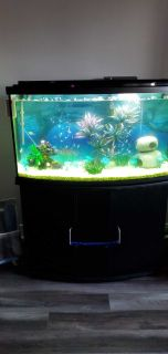 55 gallon Fish tank + accessories + food + the stand