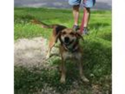 Adopt Patty a Beagle / Hound (Unknown Type) / Mixed dog in Osage Beach