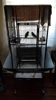 BIRD CAGE WITH TWO PARAKEETS