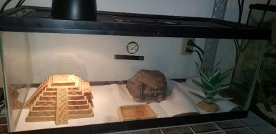 Complete set up for a panther gecko