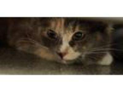 Carolina: Kittens For Sale Near Me Craigslist Nh