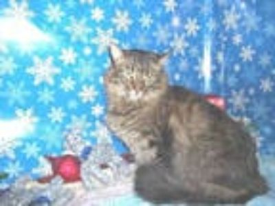 Adopt EMMA a Brown Tabby Domestic Longhair / Mixed (long coat) cat in Winter