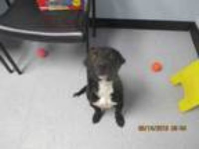 Adopt HOWIE a Mixed Breed