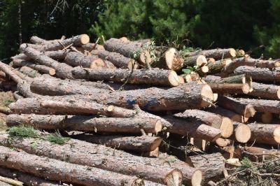 Red Pine Logs