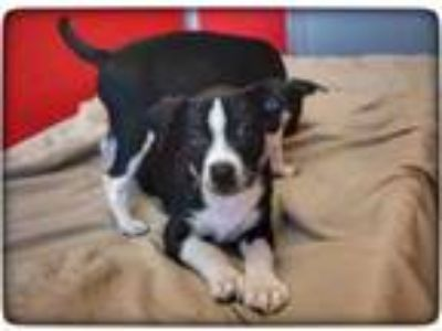 Adopt Jerry a Black Mixed Breed (Medium) / Mixed dog in Rochester, MN (25288527)