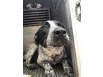 Adopt Peppa a Black Pointer / Australian Cattle Dog / Mixed dog in Edinburg