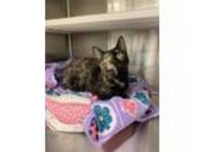 Adopt Skipper Bobbi a Domestic Shorthair / Mixed cat in Corpus Christi