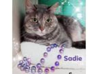 Adopt Sadie a Gray or Blue Domestic Shorthair cat in League City, TX (25508264)