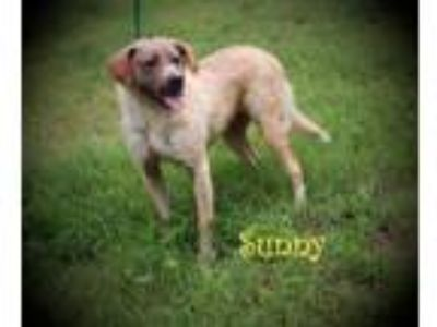 Adopt Sunny a Terrier