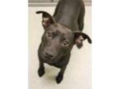 Adopt Hershey a Black Terrier (Unknown Type, Small) / Mixed dog in Gulfport