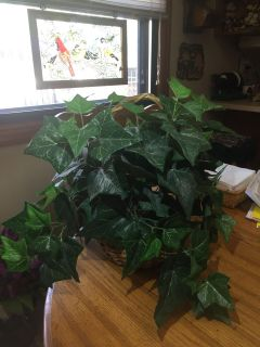 Artificial Ivy plant in basket