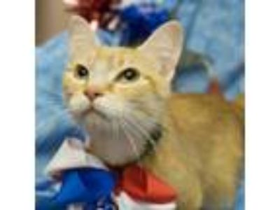 Adopt Roxie a Domestic Shorthair / Mixed cat in Westmont, IL (25617549)