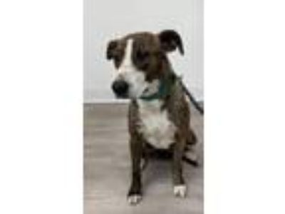 Adopt Isabell a Terrier (Unknown Type, Small) / Mixed dog in Thousand Oaks