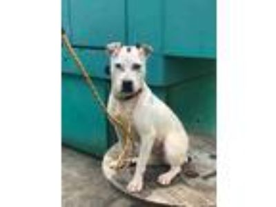 Adopt Penny a White Terrier (Unknown Type, Small) / Mixed dog in Philadelphia