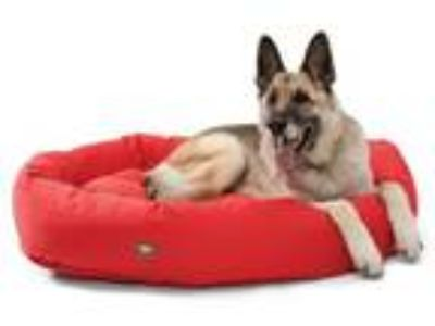 Adopt DONATIONS: BEDS & TOYS a German Shepherd Dog