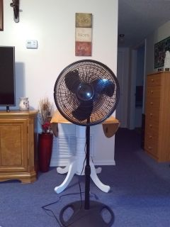 Brand New Pedistle Black Fan.....
