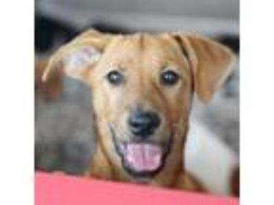 Adopt Janet Wood a Hound, Mixed Breed