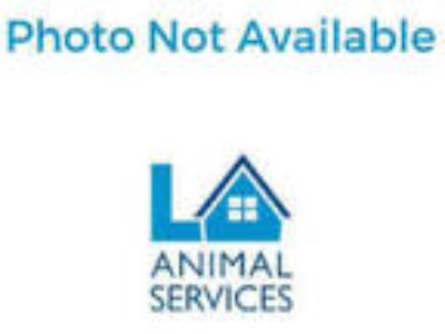 Adopt a Red Chicken / Mixed bird in Van Nuys, CA (25559495)