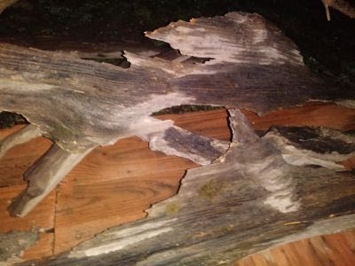 100 year old Driftwood for Taxadermy or Landscapers