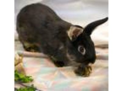 Adopt Madge a Other/Unknown / Mixed (medium coat) rabbit in Troutdale