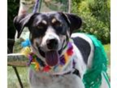 Adopt Butterfly Mama a Hound
